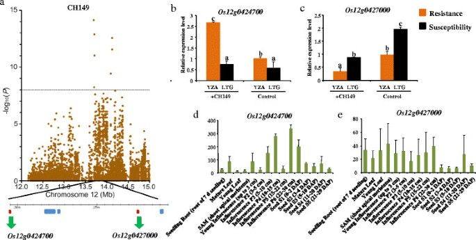 Genome-wide association study of blast resistance in indica