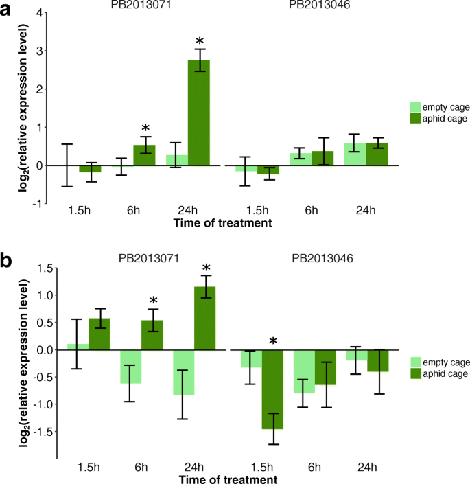 Reduced phloem uptake of Myzus persicae on an aphid resistant pepper