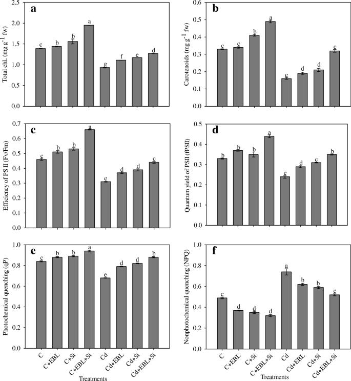 Interactive effect of 24-epibrassinolide and silicon