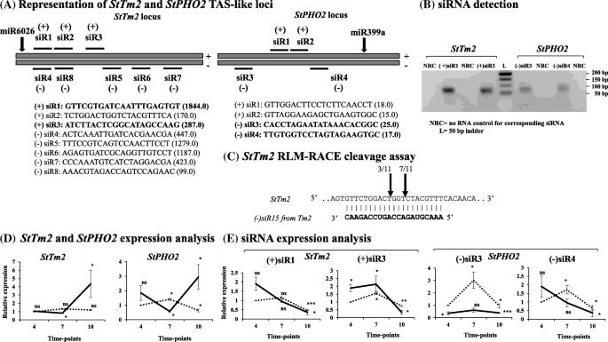 Genome-wide transcriptome analysis reveals small RNA