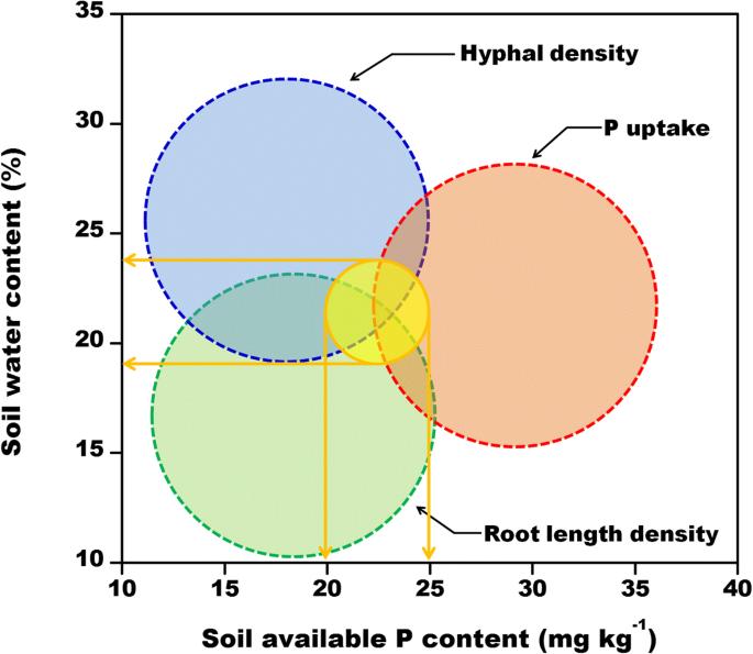 Simultaneously maximizing root/mycorrhizal growth and phosphorus