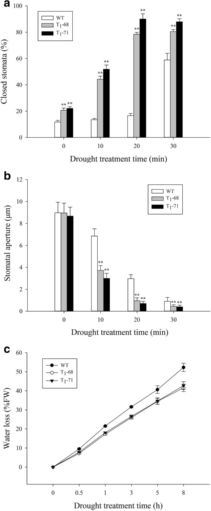 Cucumber Phospholipase D alpha gene overexpression in