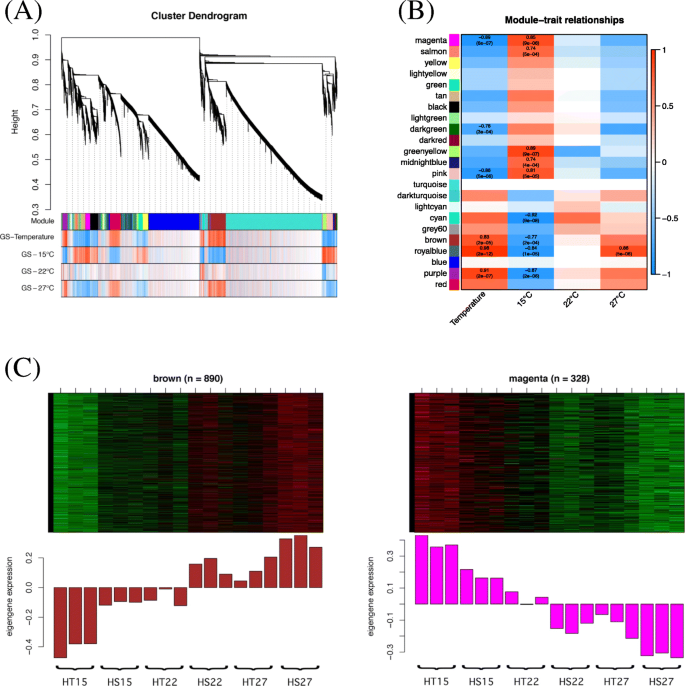 Analysis of ambient temperature-responsive transcriptome in shoot