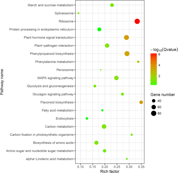 Transcriptomic profiling identifies differentially expressed