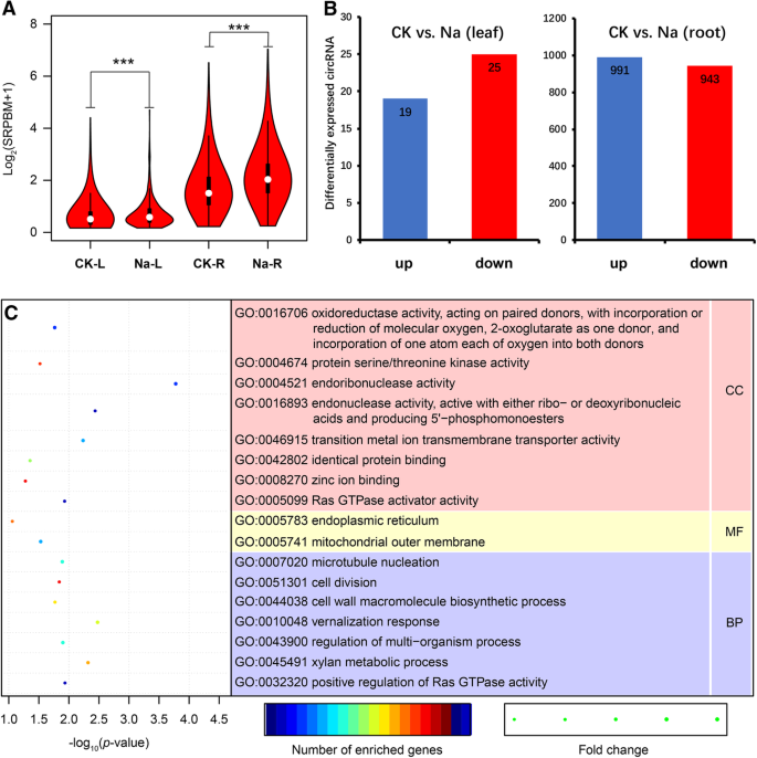 Identification of cucumber circular RNAs responsive to salt