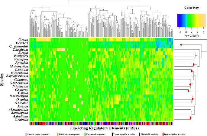Evolutionary conservation of MLO gene promoter signatures