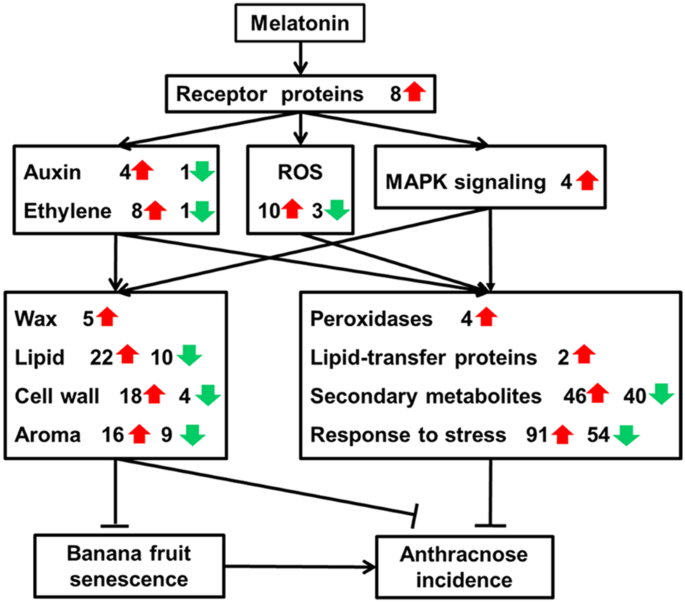 Comparative transcriptomic and metabolic analysis reveals