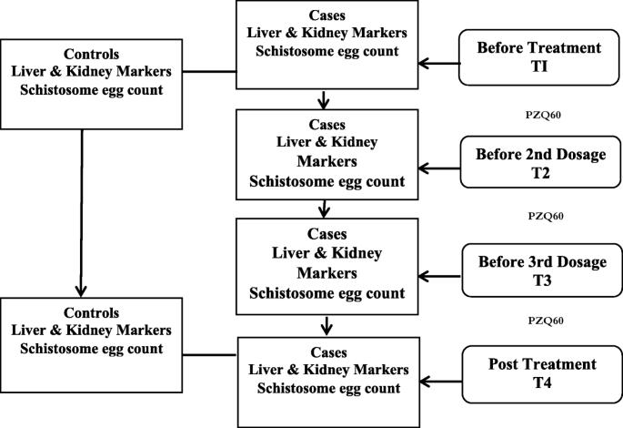 schistosomiasis treatment dosage