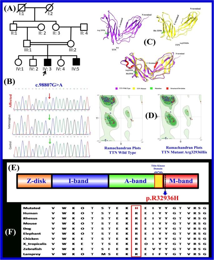 Nervous System | BioNinja