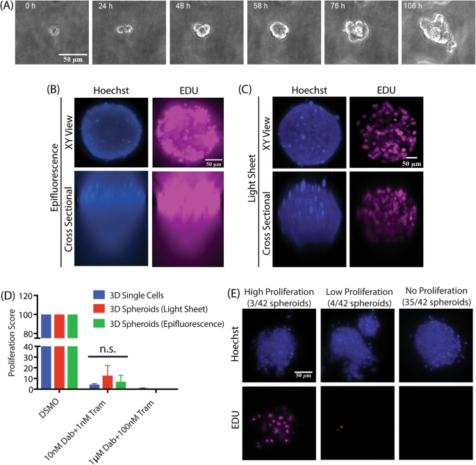 An image-based assay to quantify changes in proliferation