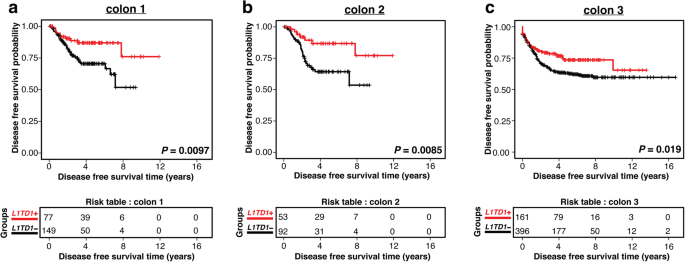 L1td1 A Prognostic Marker For Colon Cancer Bmc Cancer Full Text