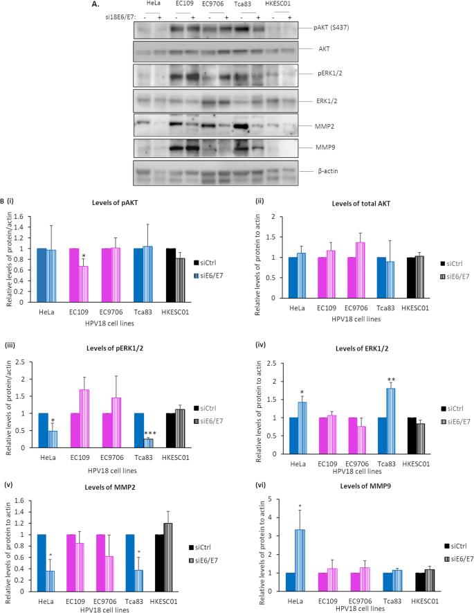 humán papillomavírus onkogén expressziója