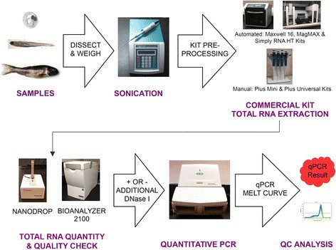A Comparison Of Commercially Available Automated And Manual Extraction Kits For The Isolation Of Total Rna From Small Tissue Samples Springerlink