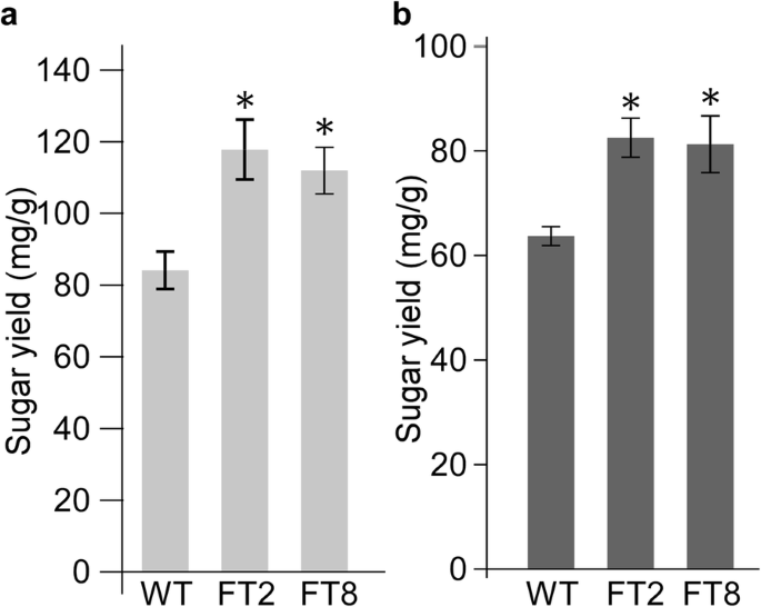 Overexpression of a rice BAHD acyltransferase gene in