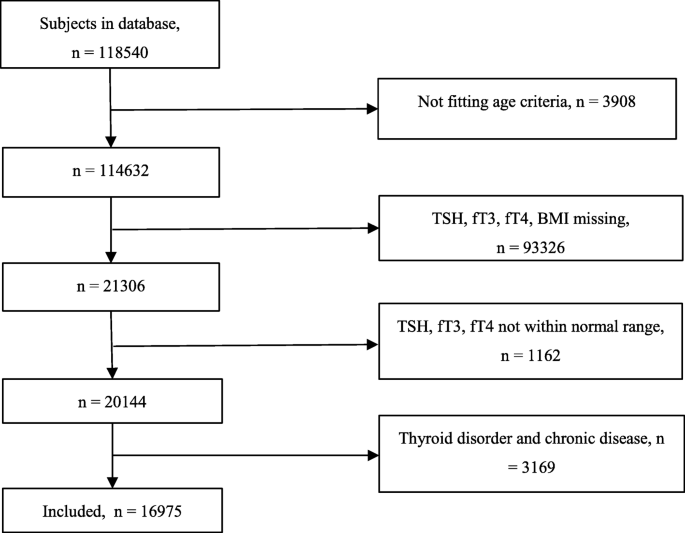 Thyroid Function Body Mass Index And Metabolic Risk Markers In