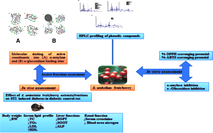 Phytochemical analysis and antidiabetic potential of