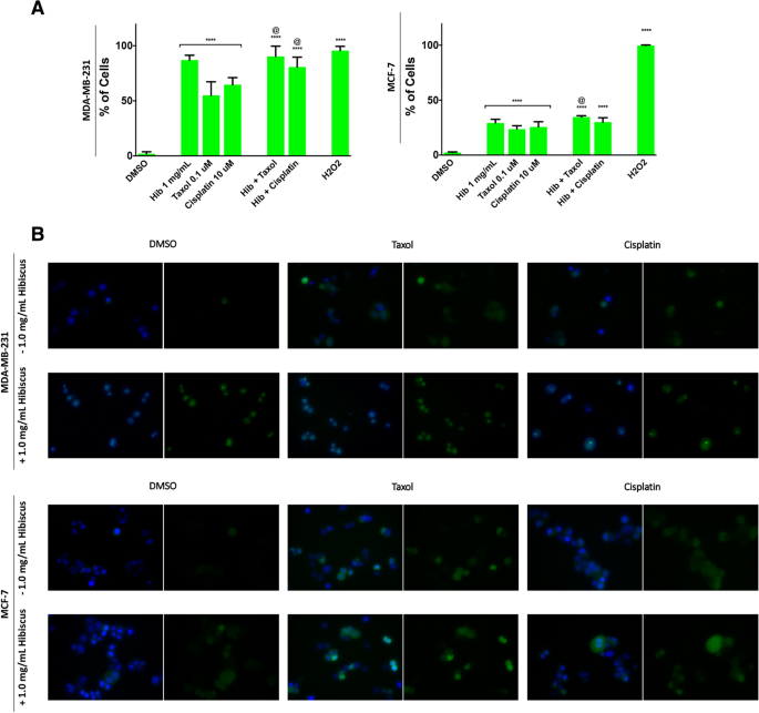 Hibiscus flower extract selectively induces apoptosis in breast