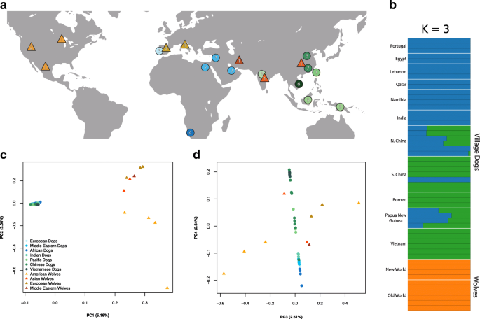 Comparison of village dog and wolf genomes highlights the role of
