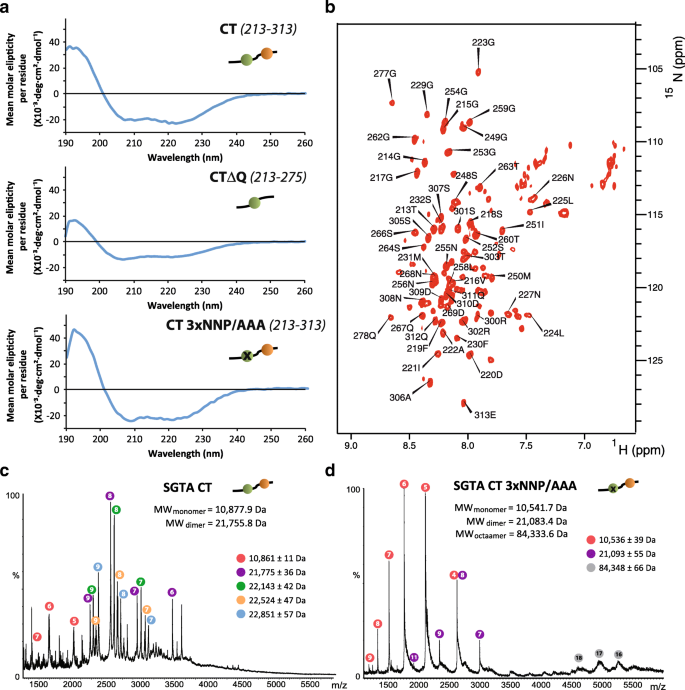 Structural complexity of the co-chaperone SGTA: a conserved C
