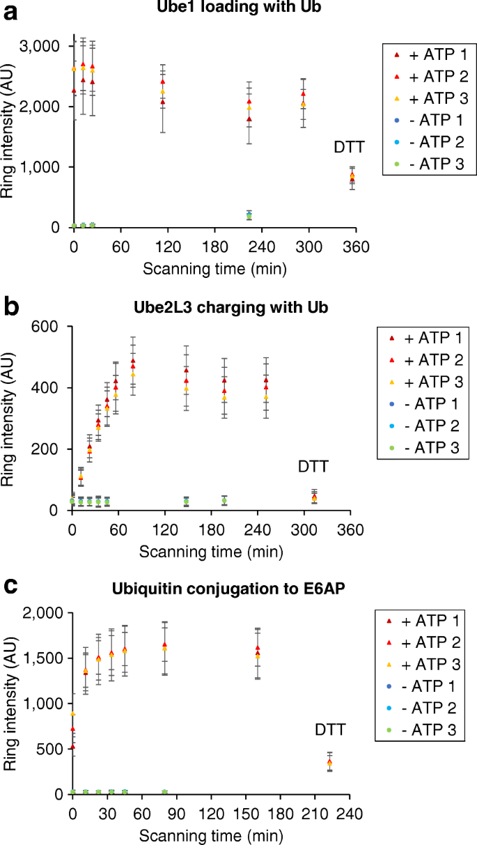 Real-time tracking of complex ubiquitination cascades using a