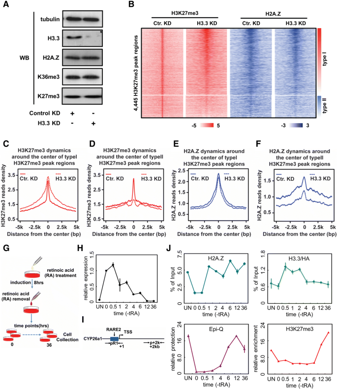 Histone variants H2A Z and H3 3 coordinately regulate PRC2-dependent