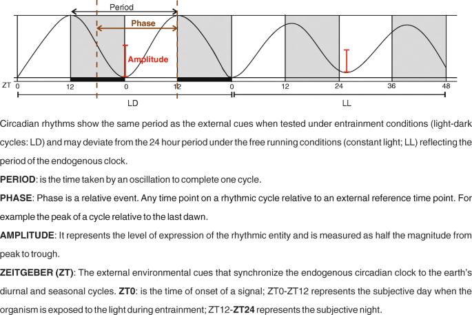 Circadian oscillator proteins across the kingdoms of life
