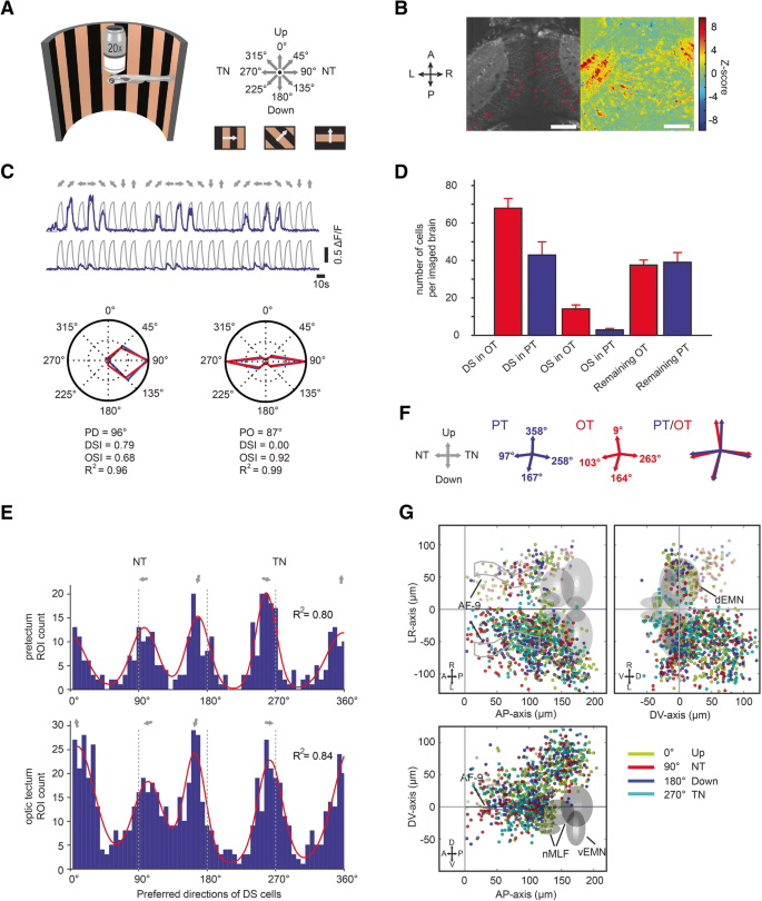 Selective processing of all rotational and translational