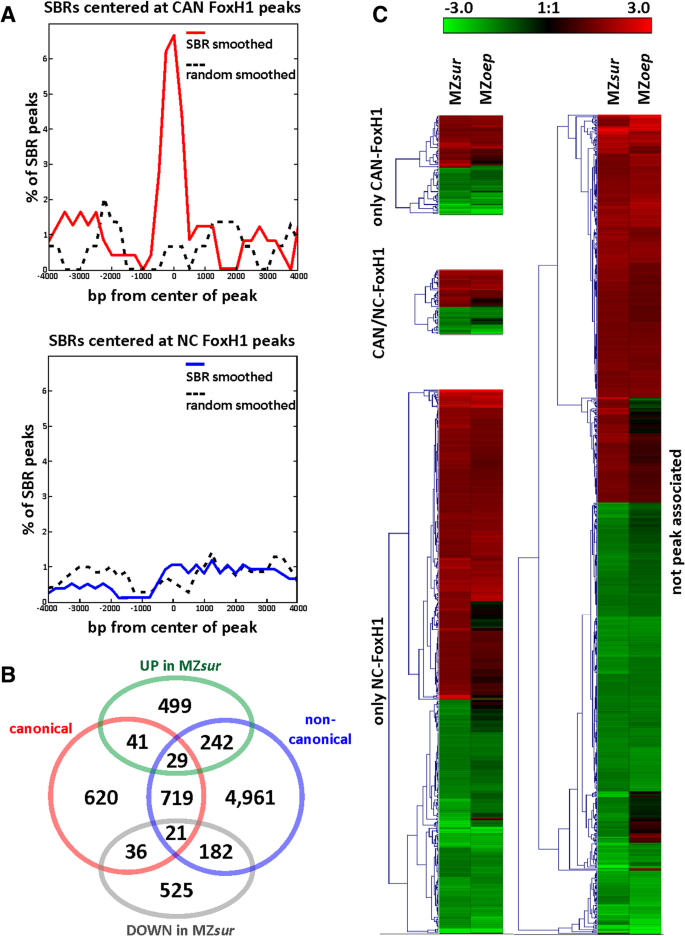 FoxH1 represses miR-430 during early embryonic development