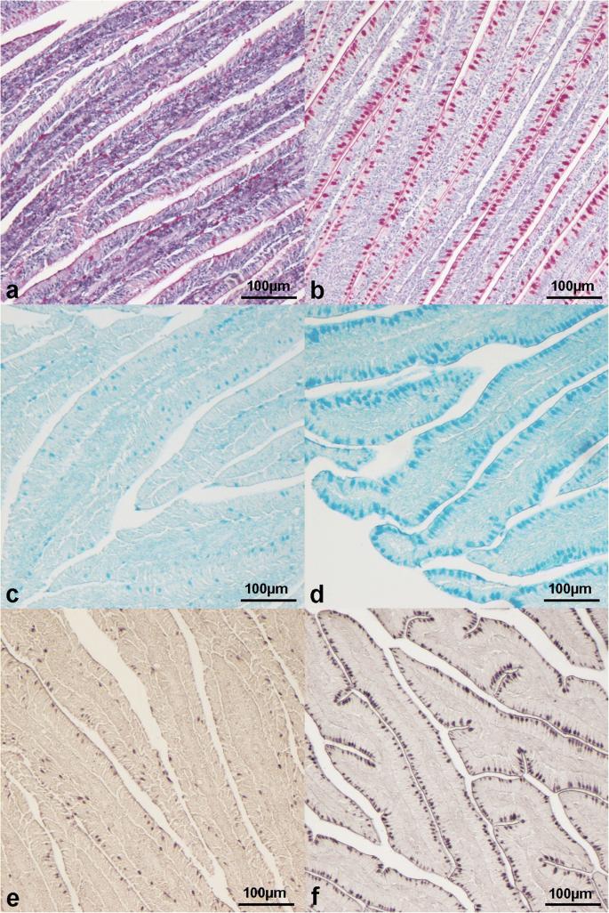 Modulation of intestinal microbiota, morphology and mucin