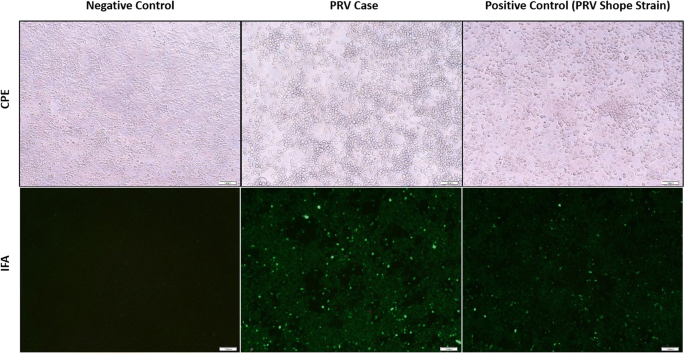 Pseudorabies detected in hunting dogs in Alabama and