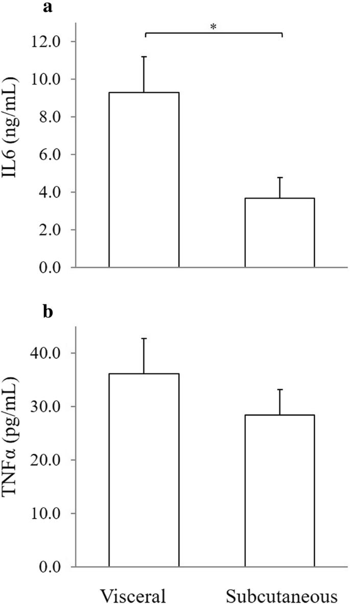 Adipokines secretion in feline primary adipose tissue