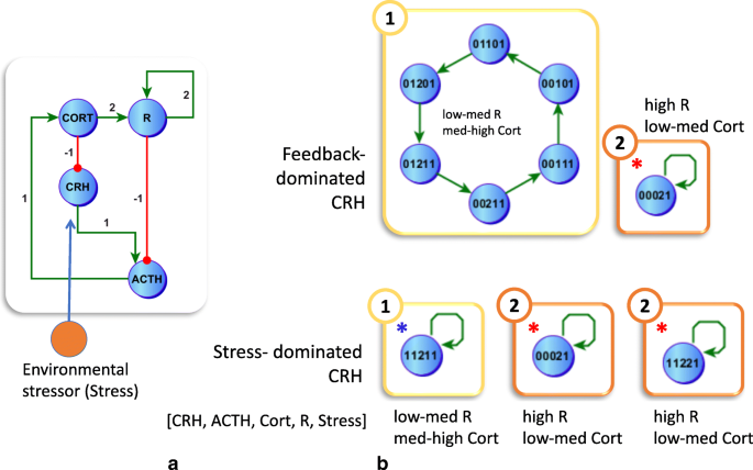 High-fidelity discrete modeling of the HPA axis: a study of