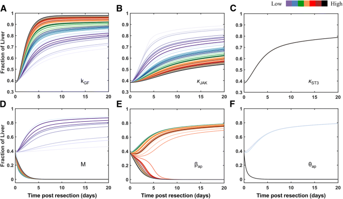 Model-based virtual patient analysis of human liver regeneration