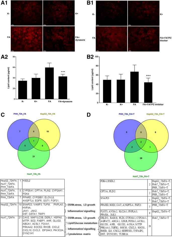Genomics of lipid-laden human hepatocyte cultures enables
