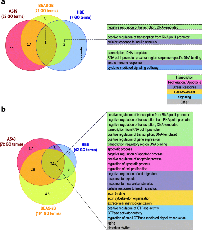 Glucocorticoid-driven transcriptomes in human airway