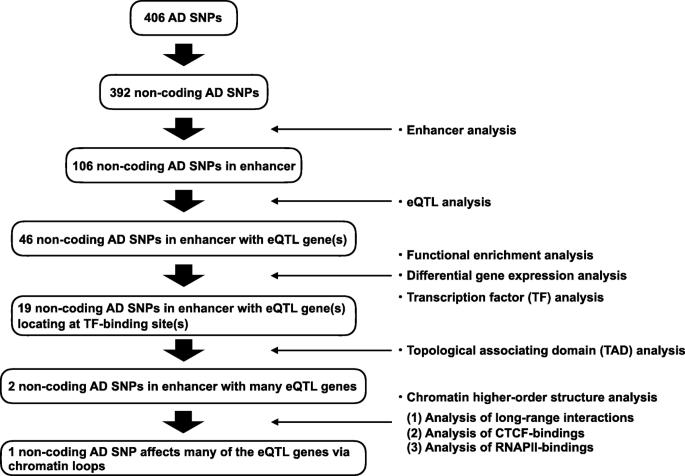 Enhancer variants associated with Alzheimer's disease affect