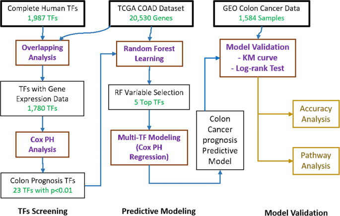 Transcription Factor Expression As A Predictor Of Colon Cancer Prognosis A Machine Learning Practice Bmc Medical Genomics Full Text