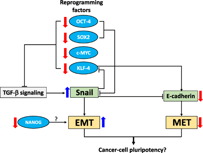 Incomplete cellular reprogramming of colorectal cancer cells