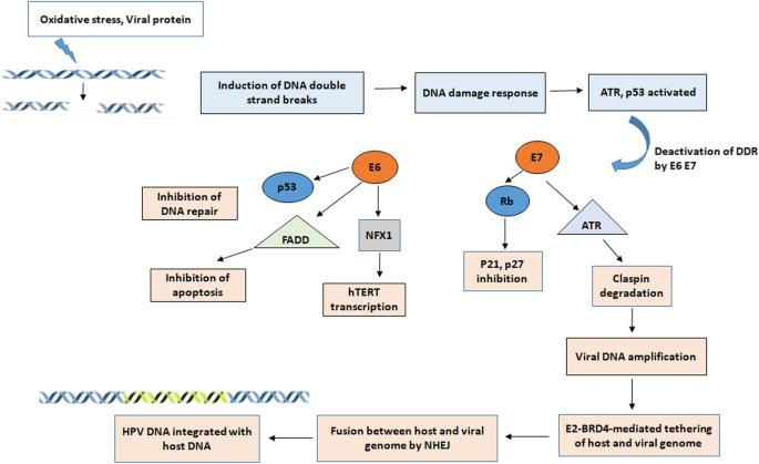 RETRACTED ARTICLE: Molecular mechanisms in progression of