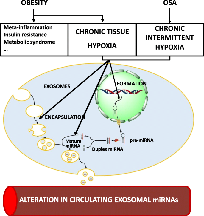 Epigenetics Dysfunction In Morbid Obesity With Or Without Obstructive Sleep Apnoea The Epimoosa Study Respiratory Research Full Text