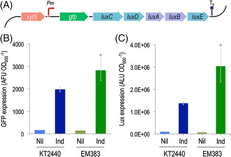 Pseudomonas 2.0: genetic upgrading of P. putida KT2440 as an ...