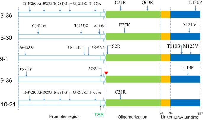 Engineered global regulator H-NS improves the acid tolerance