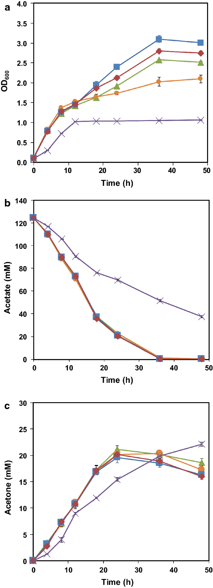 Metabolic engineering of Escherichia coli carrying the