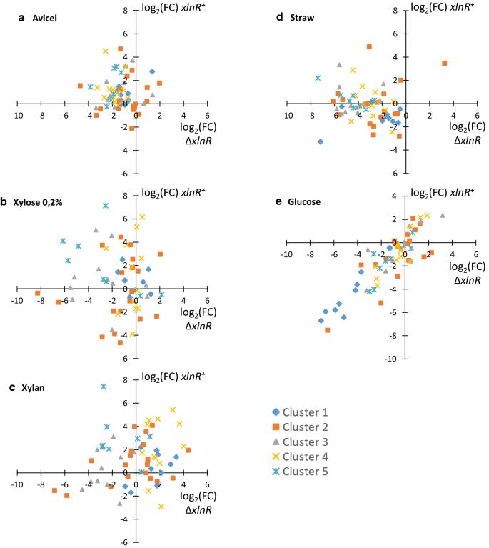 Carbon sources and XlnR-dependent transcriptional landscape
