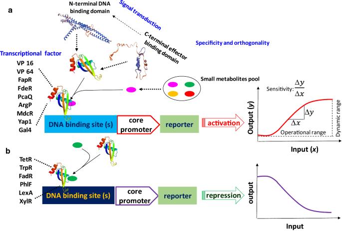 Engineering metabolite-responsive transcriptional factors to sense
