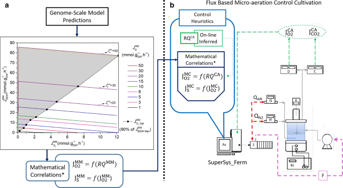 Metabolic fluxes-oriented control of bioreactors: a novel