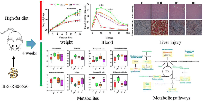 Engineered Butyrate Producing Bacteria Prevents High Fat Diet Induced Obesity In Mice Microbial Cell Factories Full Text