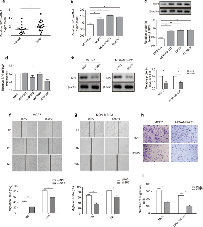 miR-506 attenuates methylation of lncRNA MEG3 to inhibit migration