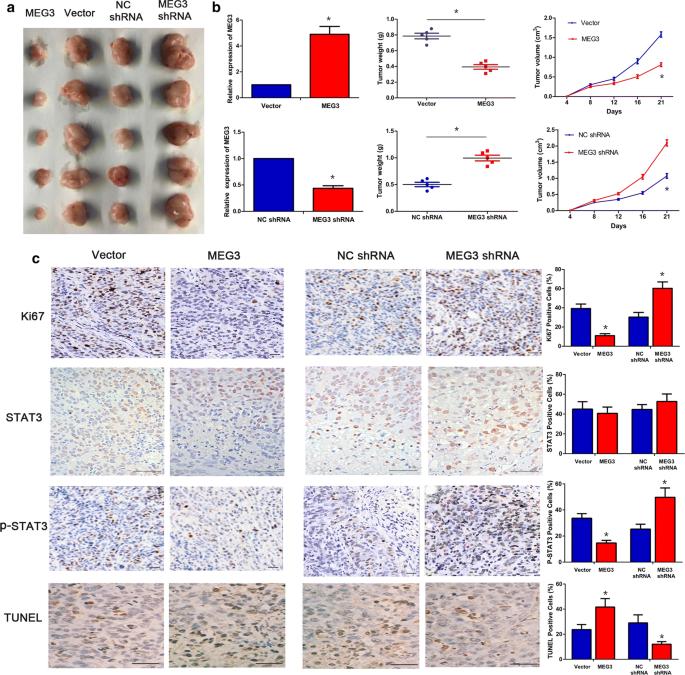 Long non-coding RNA MEG3 inhibits cervical cancer cell