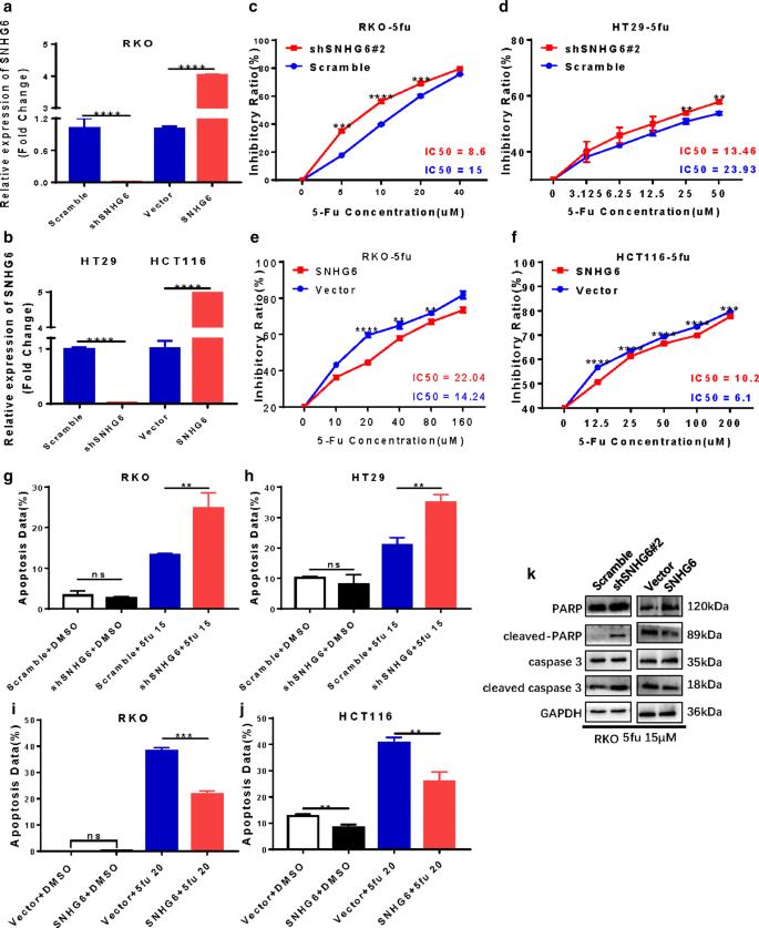 LncRNA SNHG6 promotes chemoresistance through ULK1-induced